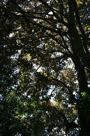 Denmans Garden: sunlight through the trees
