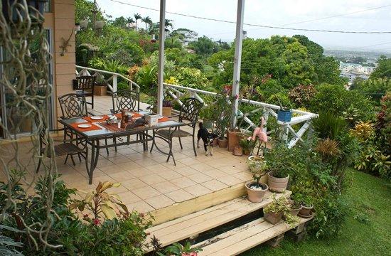 The Amazon Lodge B&B : The terrace