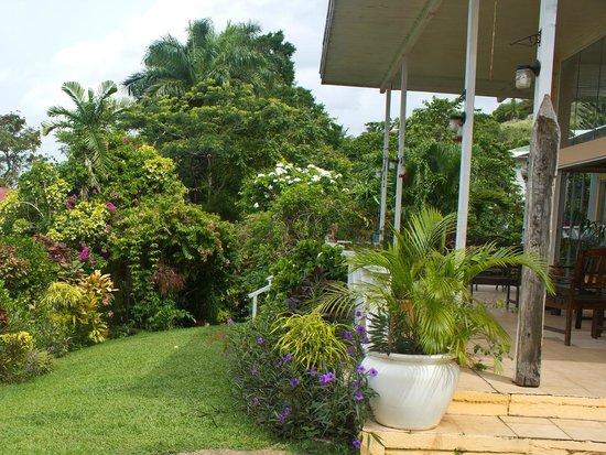 The Amazon Lodge B&B : The garden