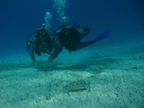Me and my boyfriend seeing a sea turtle!!  This photo was taken by Coconut Divers Photographer!