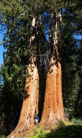 Sequoia Outdoor Sports - Private Day Tours: Garfield Grove, Sequoia National Park