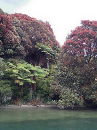 Mt. Tarawera: Lake Tarawera, by Mt Taraweara - foreshore