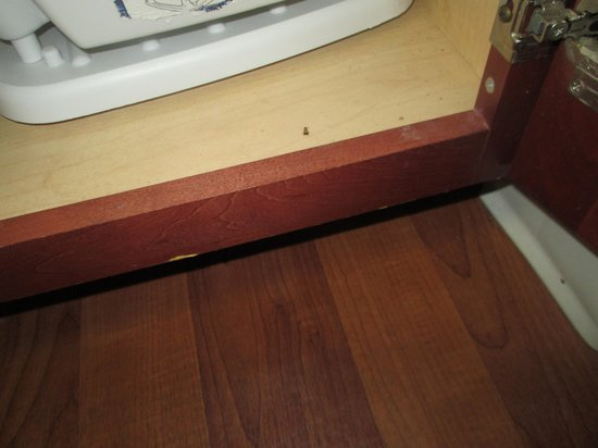 Extended Stay America - Orlando - Maitland - Summit Tower Blvd: Roaches galore in room 226
