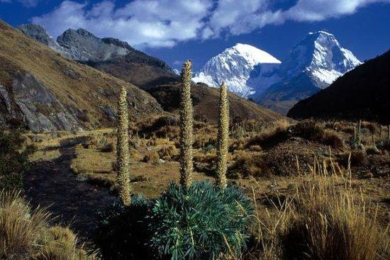 Nationalpark Huascarán: Parque Nacional Huascaran