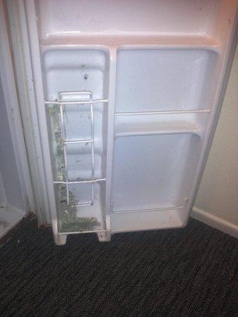 Econo Inn : mold filled mini fridge