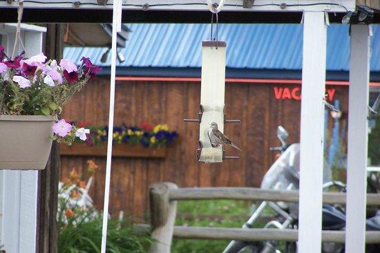 Black Bear Inn : Bird buddies