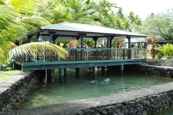 Truk Blue Lagoon Resort : Covered area overlooking fish pond