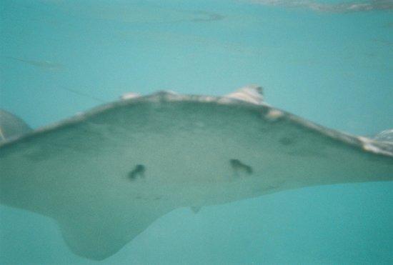 Handling the stingrays - Picture of Albert Moana Lagoon ...