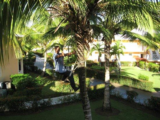 Grand Bahia Principe San Juan : Coconut gardening