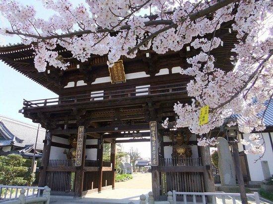 南光坊山門と桜 - Picture of Nankobo, Imabari - Tripadvisor