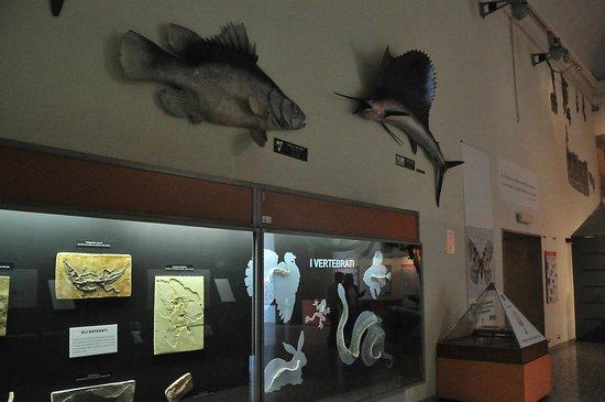 """Museo di Scienze Naturali """"E. Caffi"""": Ausstellungsraum"""
