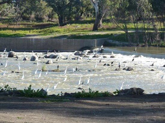 Brewarrina Aboriginal Fish Traps