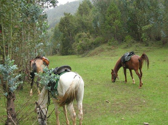 Equus Ethiopia - Day Trail Rides