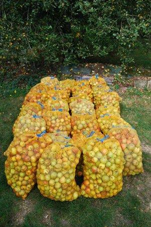 Moulin Kerguerhent : Les pommes du verger