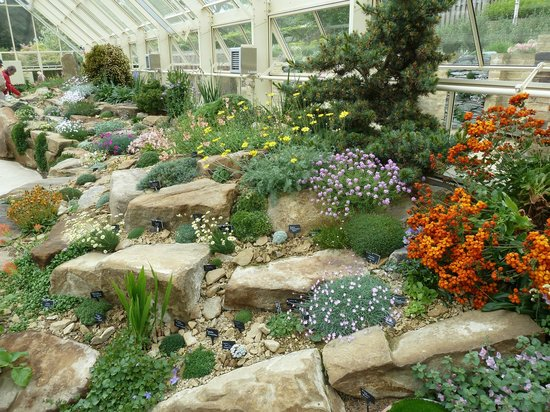 In the Greenhouse Rock Garden - Picture of RHS Garden Harlow Carr ...
