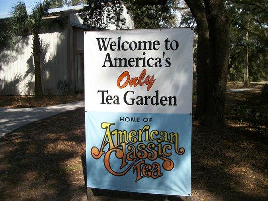 Charleston Tea Plantation: Welcome