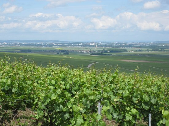 Le Phare de Vezernay : Vineyard view from top of light house