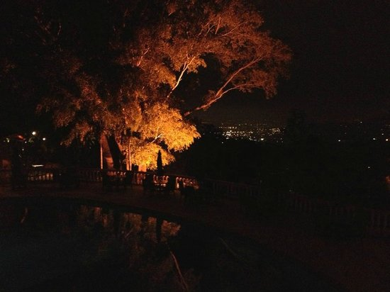Ringle Resort Hotel & Spa: Trees Lit Up At Night