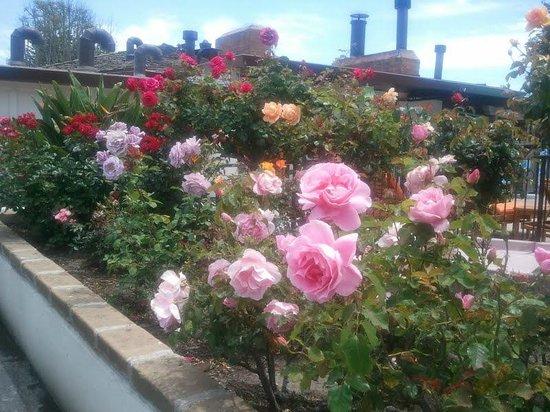 Casa Munras Garden Hotel & Spa: Munras roses in bloom