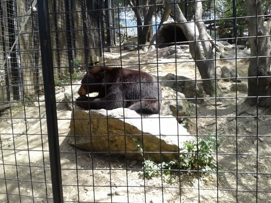 Folsom City Zoo: Henry the bear enjoying a coconut