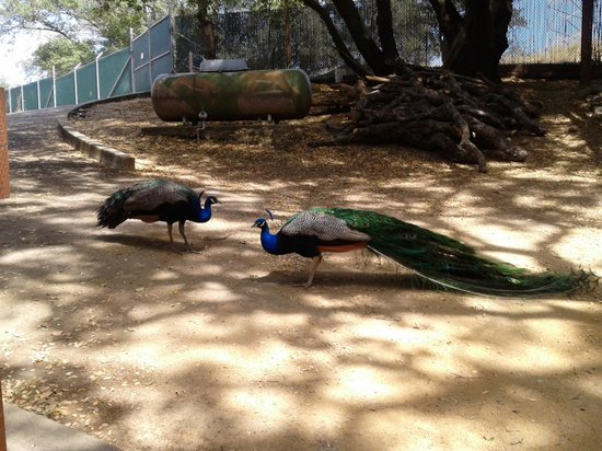Folsom City Zoo: .