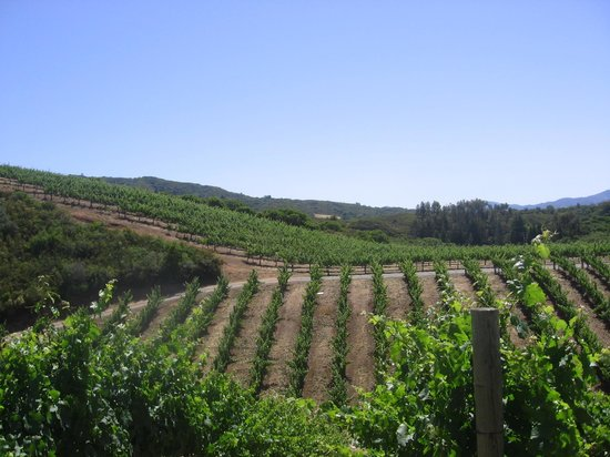 BobDog Winery: view of the vineyard