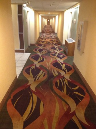 Wyndham Garden Austin : Swirly carpet - watch out boffins and drunks, it will confuse you!