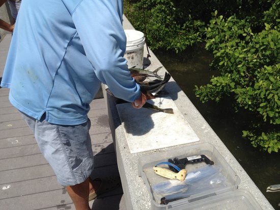 Lucky Dawg Fishing Charters: Cleaning our fish!