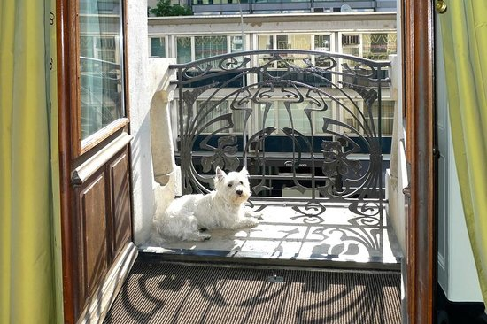 Tiffany Hotel: Our dog enjoying the Geneva sunshine at Tiffany