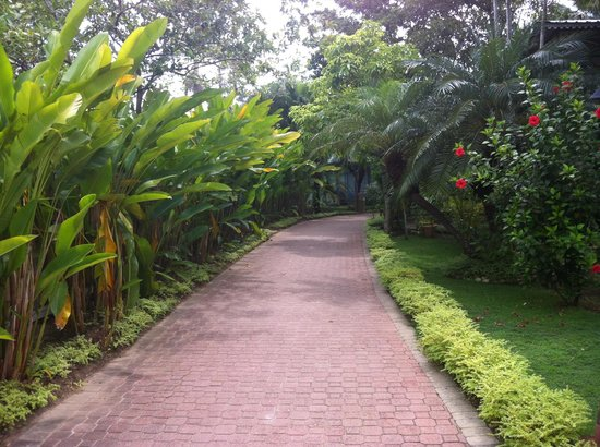 Country Country Beach Cottages: Beautiful walkway to the rooms, beach and restaurant