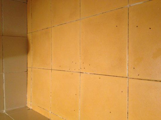 la poubelle devant l 39 entr e photo de club med sant 39 ambroggio calvi tripadvisor. Black Bedroom Furniture Sets. Home Design Ideas