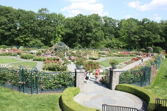 Rose garden picture of new york botanical garden bronx tripadvisor for Bronx botanical garden free admission
