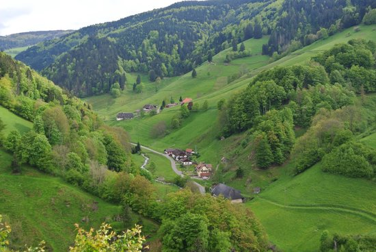 Haus Erika: black forest, area around Wieden