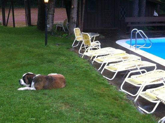 Summit Lodge & Resort: Teddy relaxing by the pool