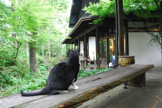 Kunugiya : 猫のホストも…