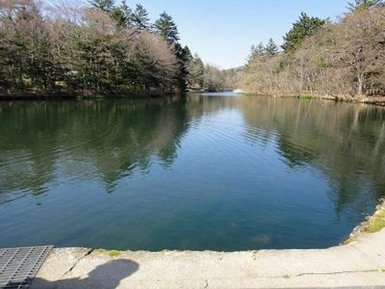 Kumoba Pond: 水面に木々が映り込みます。