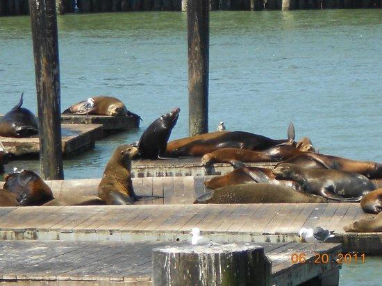 Courtyard San Francisco Fisherman's Wharf: Fisherman's Wharf