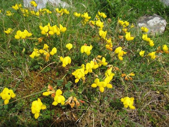 Doolin Cafe: fragrant flowers on the landscape