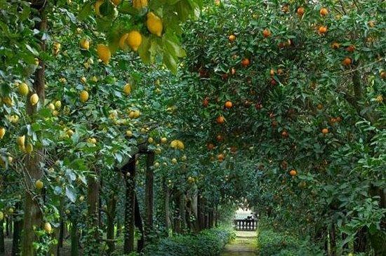 Rodi Garganico, Italie : Agrumeto