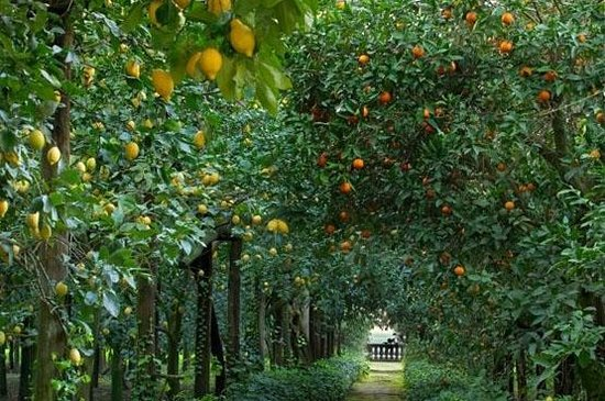 Rodi Garganico, Taliansko: Agrumeto