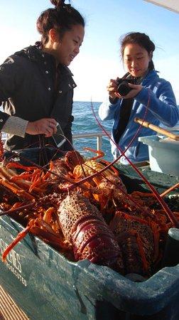 Kaikoura Fishing Charters: Tons of crayfish