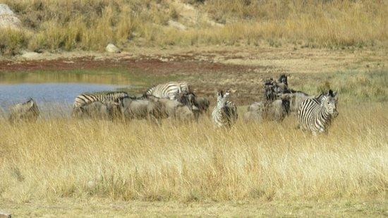Clearwater Lodges - Kudu & Tsetshepi: watering hole