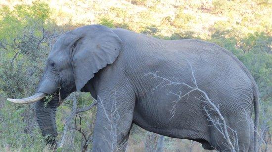 Clearwater Lodges - Kudu & Tsetshepi: animals on safari