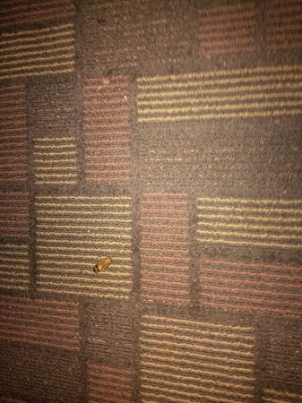 Travelodge Whittier: Cockroaches on the carpet