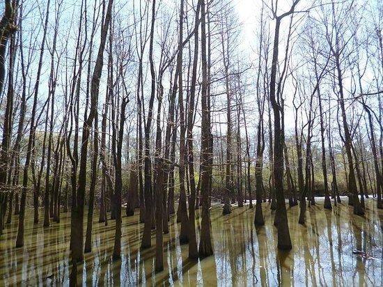 Jackson, Mississippi: Drzzewka w wodzie