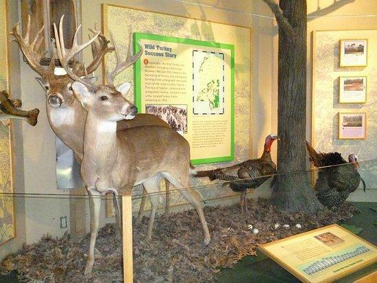 Jackson, Mississippi: Fauna z okolicy