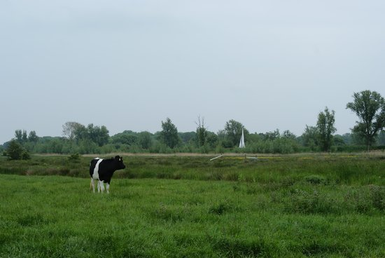 Feather Down Farms at College Farm: view over the marshes