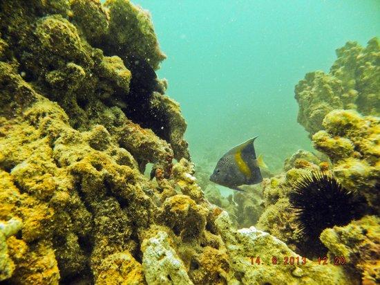 Ocean Dive Center
