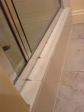 BEST WESTERN Dry Creek Inn : tuscan Room 518 ants gathered along the shower stall grout.