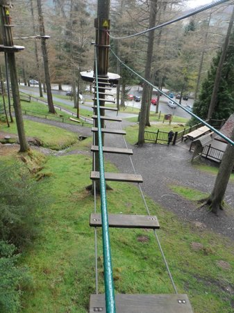 Go Ape Whinlatter: View on the treetops course